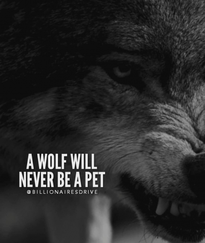 I\'m nothing but A lone Wolf misunderstood - AhSeeit