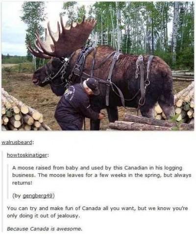 List of Best moose - Canada Memes