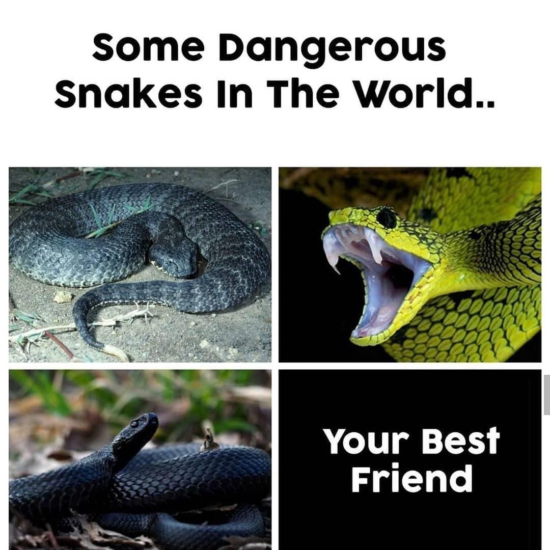 Some dangerous snakes in the world meme - Hindi Memes