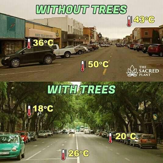 Heat temperature without tress vs with trees meme - Tamil Memes